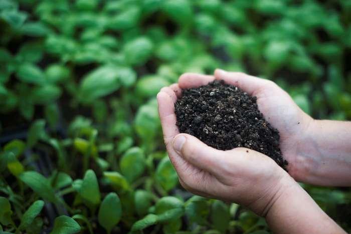 compostaggio domestico: come si fa?
